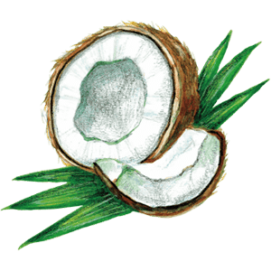 ドクターブロナーのこだわりの成分 オーガニック ココナッツオイル(ヤシ油)